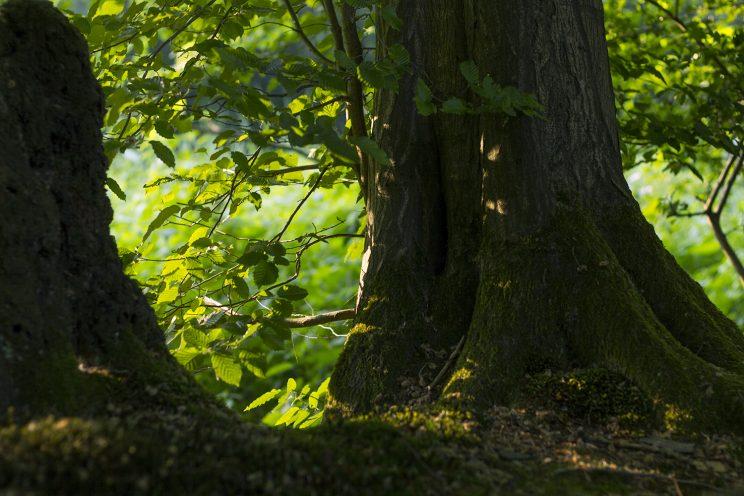 beautiful_trees