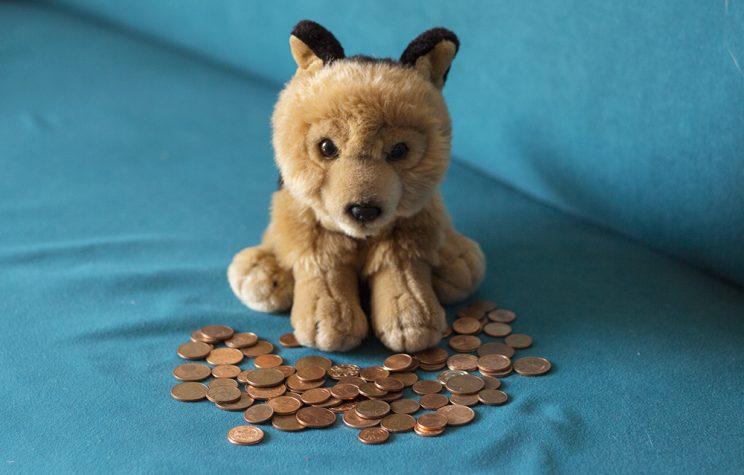 Rex mit Münzen