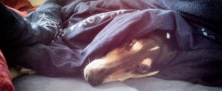 Hund im Bett? Zu Silvester ist alles erlaubt!